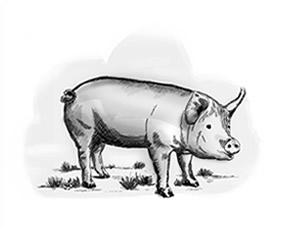 Tripa de cerdo natural