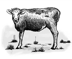 Tripa de vaca natural United Caro