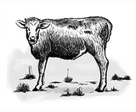 Tripa de vaca natural